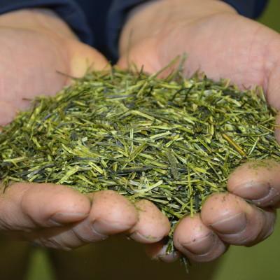Herbaty Japońskie