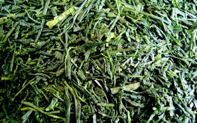 Bancha (番茶)