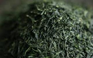 Gyokuro ・Kabusecha (玉露) (かぶせ茶)