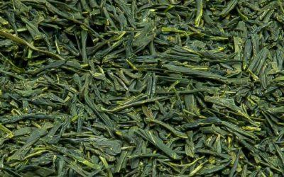 Tamaryokucha (玉緑茶), zielona herbata Tamaryokucha