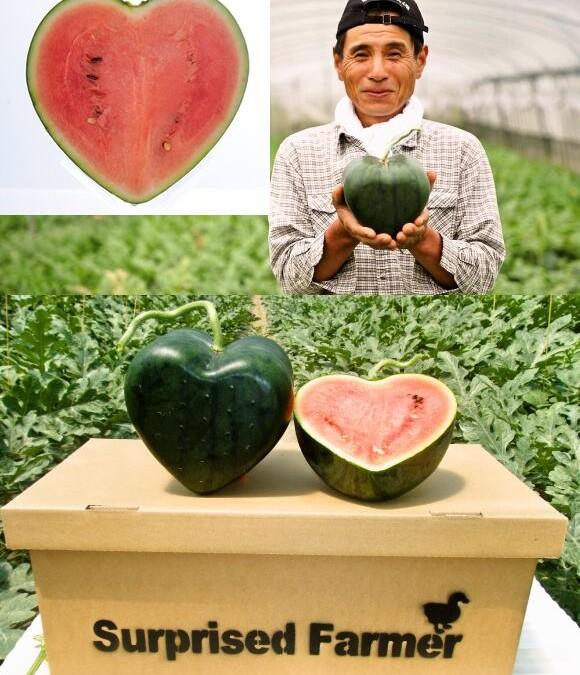Arbuz w kształcie serca