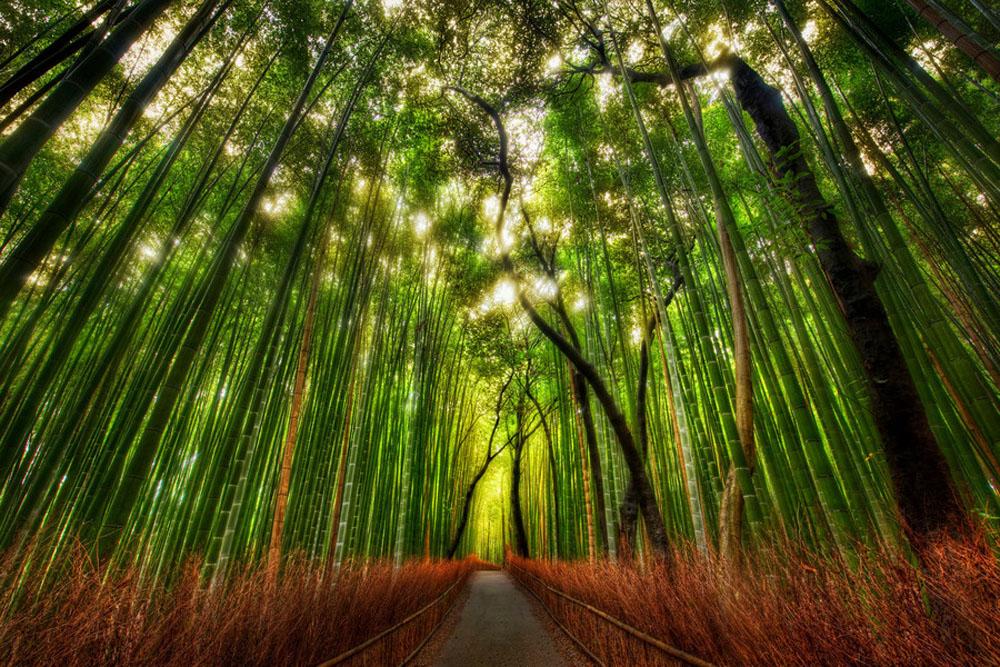 Kioto — turystycznie (część II)