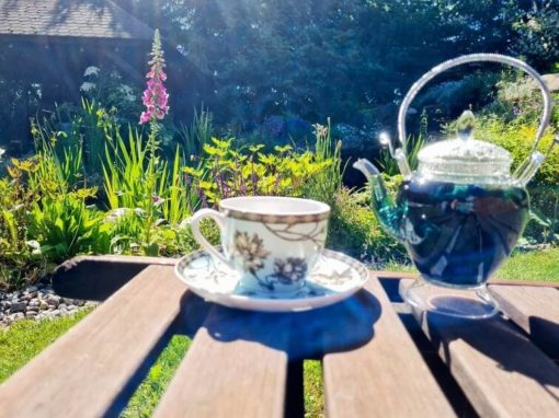 Herbata Oolong Butterfly, oolong z klitorią ternateńską, oolong z niebieską klitorią, niebieska herbata, herbata niebieska, niebieska klitoria, Herbata Oolong niebieska16